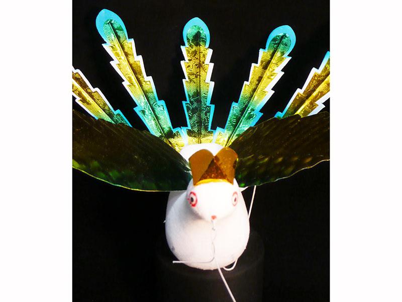 小極楽鳥5枚尾